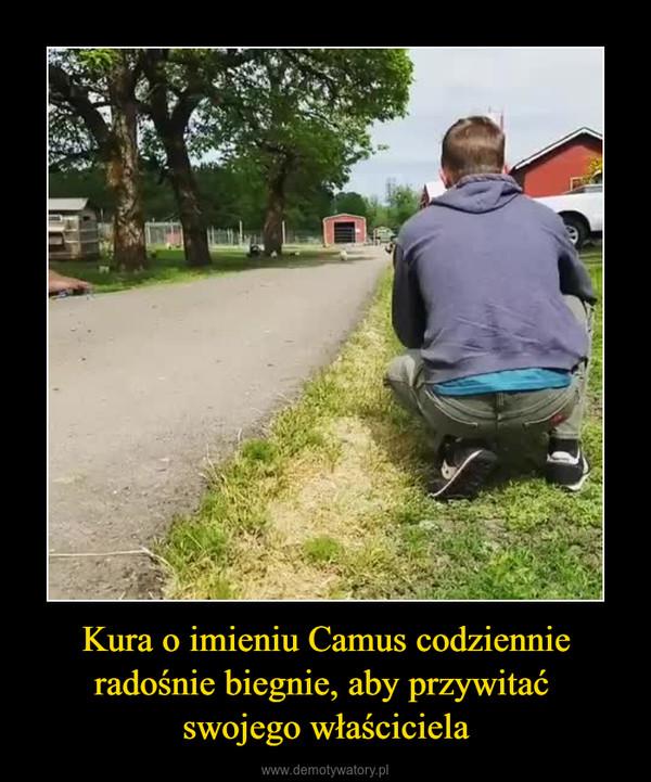 Kura o imieniu Camus codziennie radośnie biegnie, aby przywitać swojego właściciela –