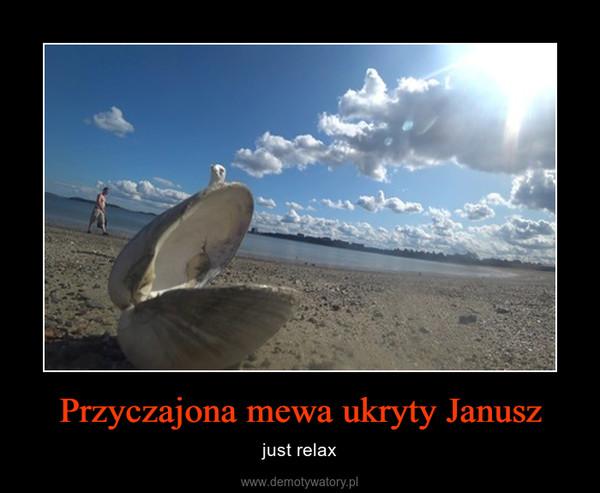 Przyczajona mewa ukryty Janusz – just relax