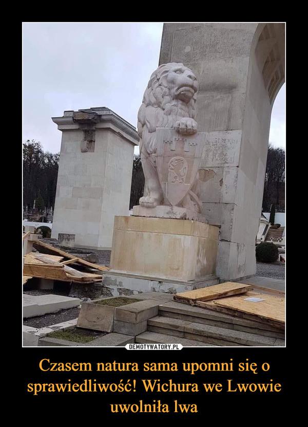 Czasem natura sama upomni się o sprawiedliwość! Wichura we Lwowie uwolniła lwa –