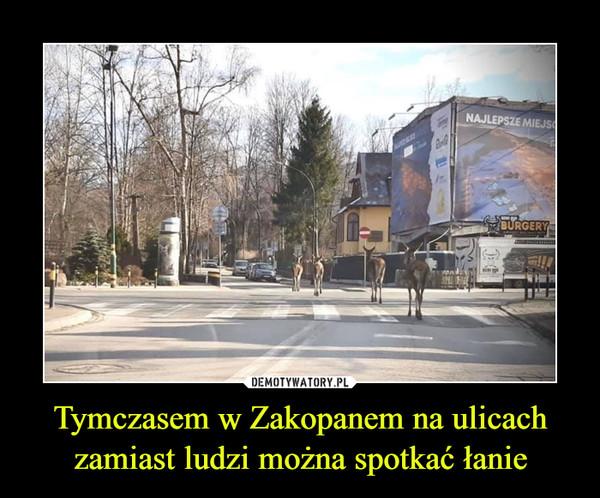 Tymczasem w Zakopanem na ulicach zamiast ludzi można spotkać łanie –