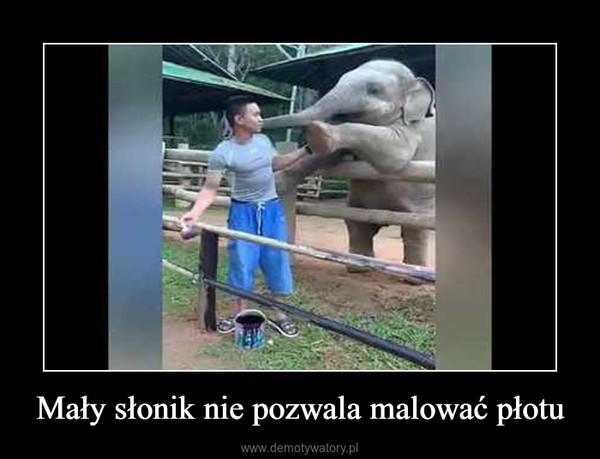 Mały słonik nie pozwala malować płotu –