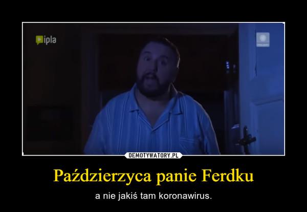 Paździerzyca panie Ferdku – a nie jakiś tam koronawirus.