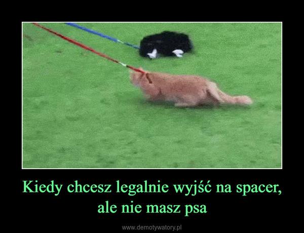 Kiedy chcesz legalnie wyjść na spacer,ale nie masz psa –