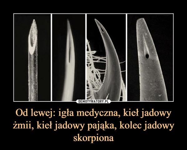 Od lewej: igła medyczna, kieł jadowy żmii, kieł jadowy pająka, kolec jadowy skorpiona