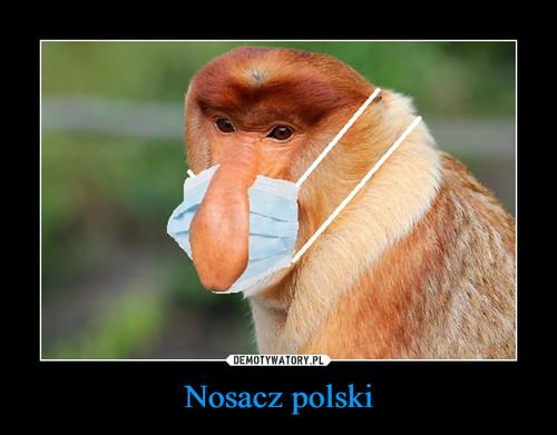 Nosacz polski