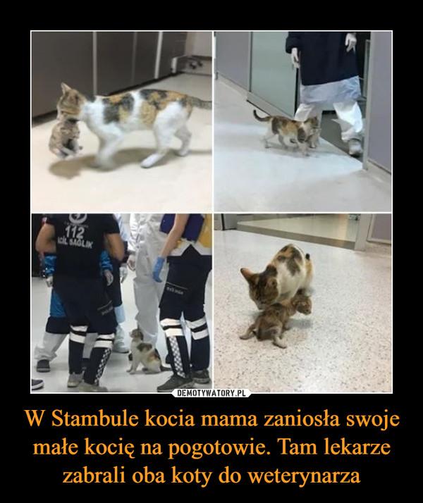 W Stambule kocia mama zaniosła swoje małe kocię na pogotowie. Tam lekarze zabrali oba koty do weterynarza –