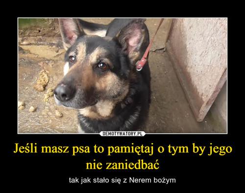 Jeśli masz psa to pamiętaj o tym by jego nie zaniedbać