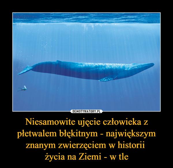 Niesamowite ujęcie człowieka z płetwalem błękitnym - największym znanym zwierzęciem w historii życia na Ziemi - w tle –