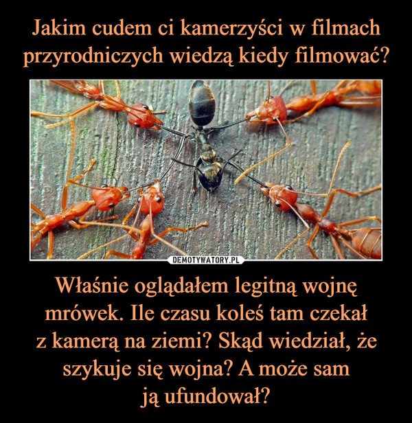 Właśnie oglądałem legitną wojnę mrówek. Ile czasu koleś tam czekałz kamerą na ziemi? Skąd wiedział, że szykuje się wojna? A może samją ufundował? –