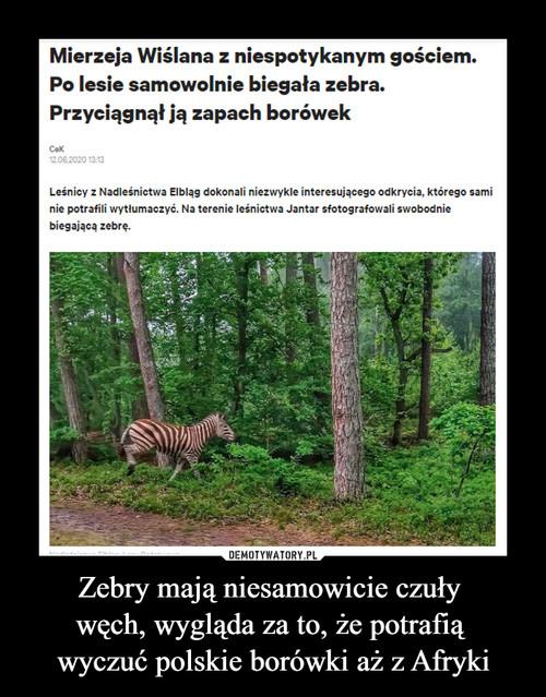 Zebry mają niesamowicie czuły  węch, wygląda za to, że potrafią  wyczuć polskie borówki aż z Afryki