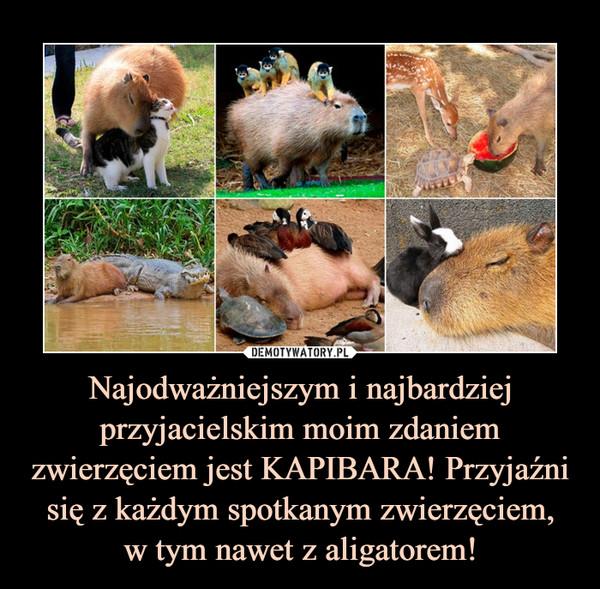 Najodważniejszym i najbardziej przyjacielskim moim zdaniem zwierzęciem jest KAPIBARA! Przyjaźni się z każdym spotkanym zwierzęciem,w tym nawet z aligatorem! –