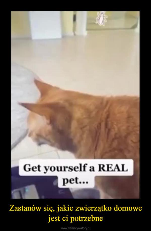 Zastanów się, jakie zwierzątko domowe jest ci potrzebne –