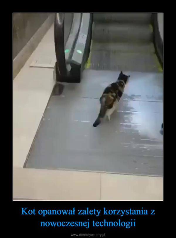 Kot opanował zalety korzystania z nowoczesnej technologii –