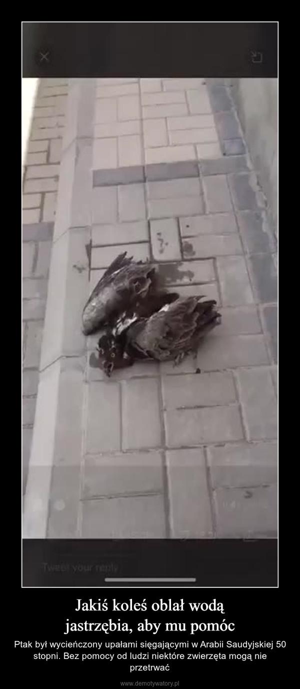 Jakiś koleś oblał wodąjastrzębia, aby mu pomóc – Ptak był wycieńczony upałami sięgającymi w Arabii Saudyjskiej 50 stopni. Bez pomocy od ludzi niektóre zwierzęta mogą nie przetrwać