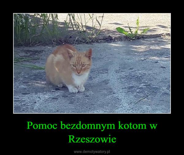 Pomoc bezdomnym kotom w Rzeszowie –