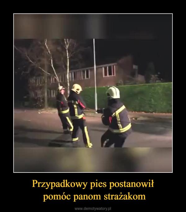 Przypadkowy pies postanowił pomóc panom strażakom –