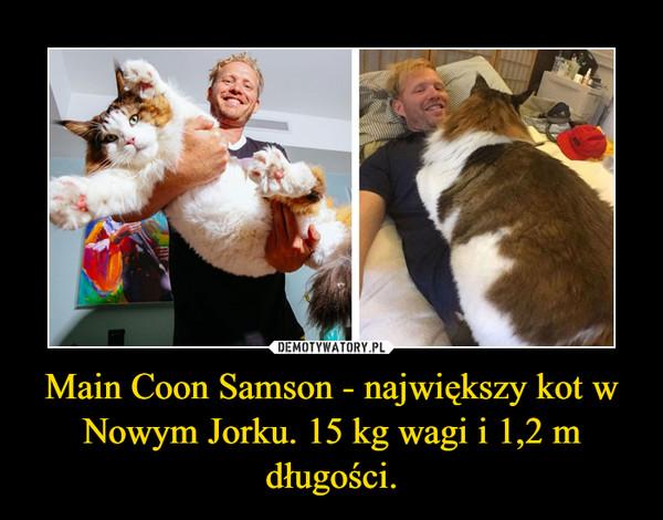 Main Coon Samson - największy kot w Nowym Jorku. 15 kg wagi i 1,2 m długości. –