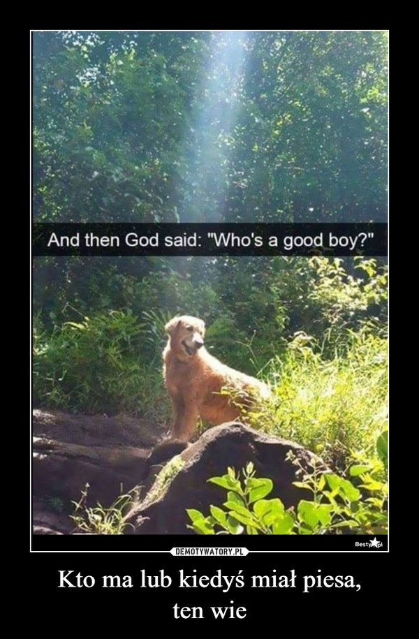 Kto ma lub kiedyś miał piesa,ten wie –