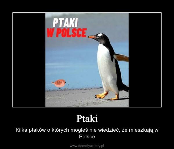 Ptaki – Kilka ptaków o których mogłeś nie wiedzieć, że mieszkają w Polsce
