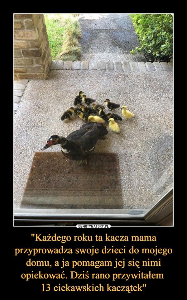 """""""Każdego roku ta kacza mama przyprowadza swoje dzieci do mojego domu, a ja pomagam jej się nimi opiekować. Dziś rano przywitałem 13 ciekawskich kaczątek"""" –"""