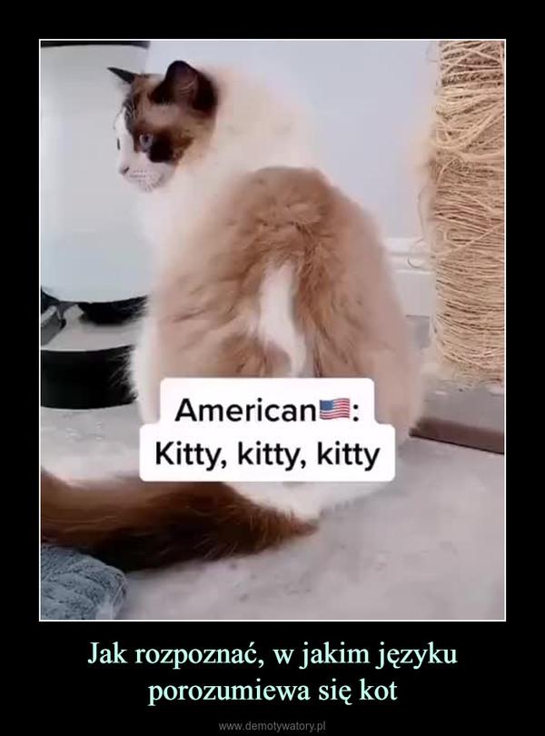 Jak rozpoznać, w jakim języku porozumiewa się kot –
