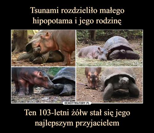 Tsunami rozdzieliło małego hipopotama i jego rodzinę Ten 103-letni żółw stał się jego najlepszym przyjacielem