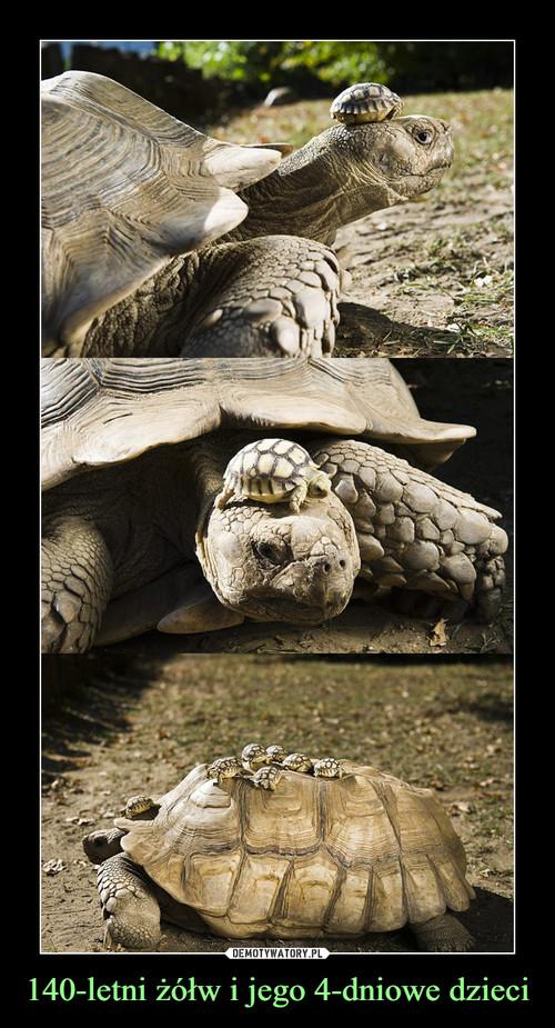 140-letni żółw i jego 4-dniowe dzieci