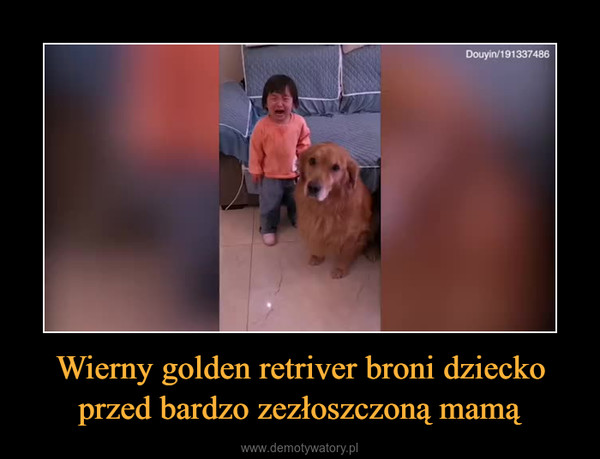 Wierny golden retriver broni dziecko przed bardzo zezłoszczoną mamą –