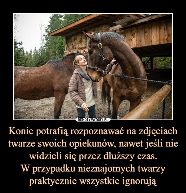 Konie potrafią rozpoznawać na zdjęciach twarze swoich opiekunów, nawet jeśli nie widzieli się przez dłuższy czas.W przypadku nieznajomych twarzy praktycznie wszystkie ignorują –