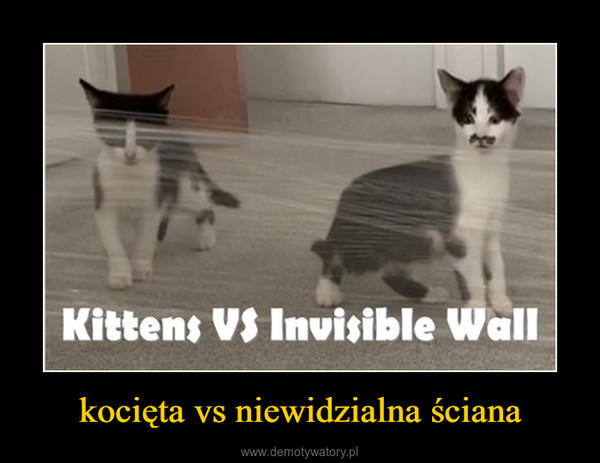 kocięta vs niewidzialna ściana –