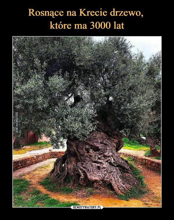 [Obrazek: 1606056369_j7lahb_600.jpg]