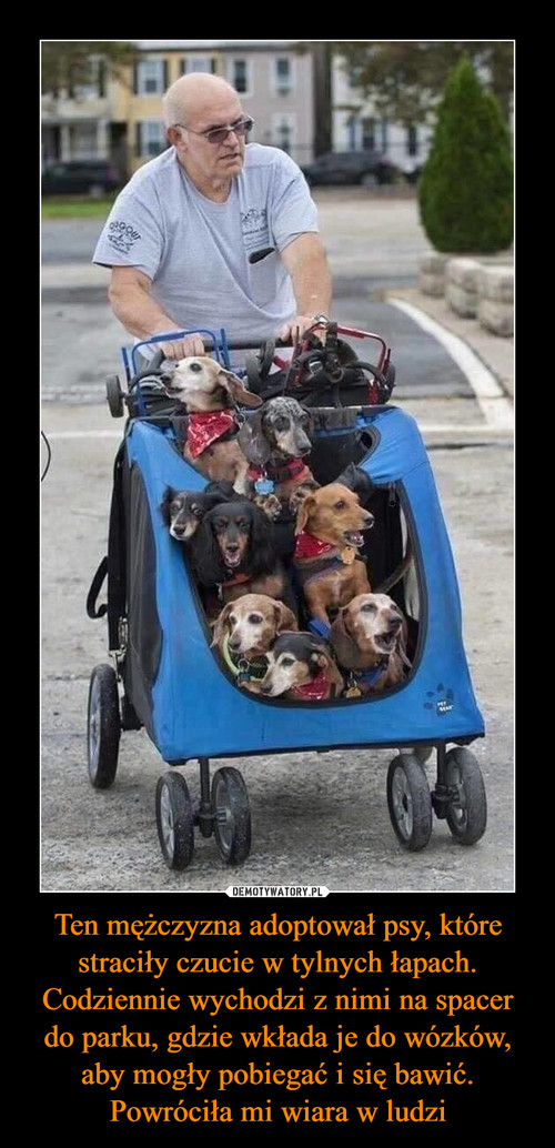 Ten mężczyzna adoptował psy, które straciły czucie w tylnych łapach. Codziennie wychodzi z nimi na spacer do parku, gdzie wkłada je do wózków, aby mogły pobiegać i się bawić. Powróciła mi wiara w ludzi