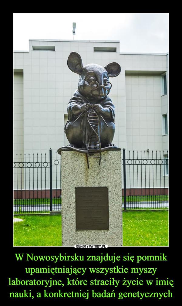 W Nowosybirsku znajduje się pomnik upamiętniający wszystkie myszy laboratoryjne, które straciły życie w imię nauki, a konkretniej badań genetycznych –