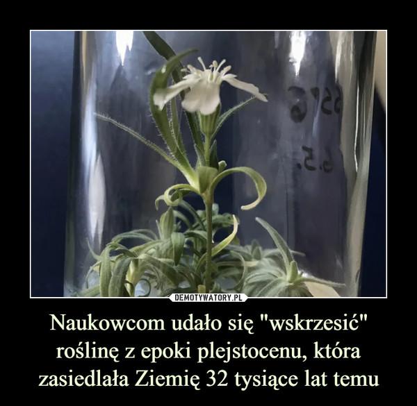 """Naukowcom udało się """"wskrzesić"""" roślinę z epoki plejstocenu, która zasiedlała Ziemię 32 tysiące lat temu –"""