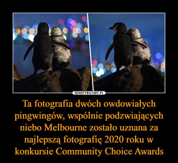 Ta fotografia dwóch owdowiałych pingwingów, wspólnie podzwiających niebo Melbourne zostało uznana za najlepszą fotografię 2020 roku w konkursie Community Choice Awards –
