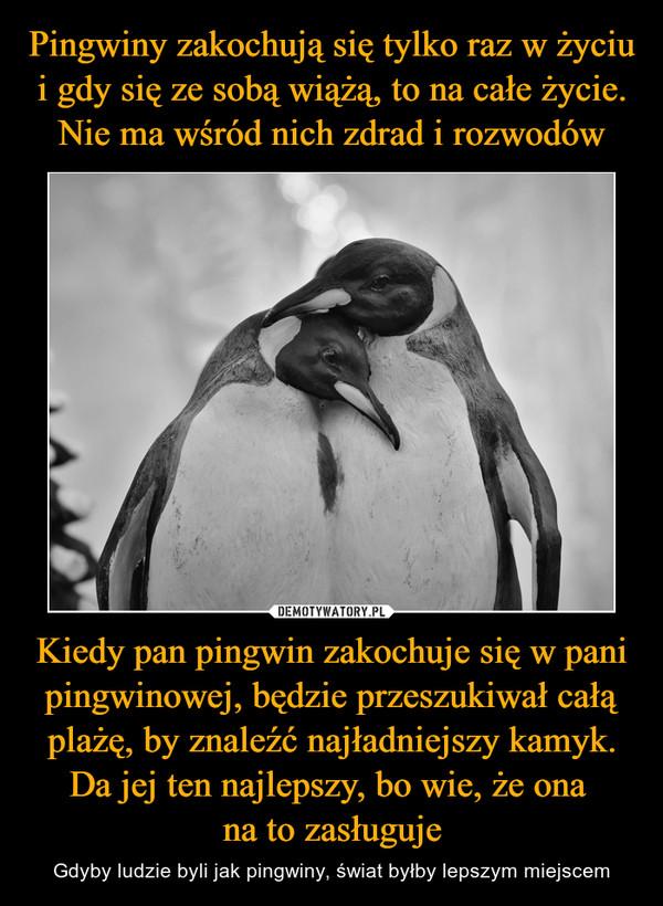 Kiedy pan pingwin zakochuje się w pani pingwinowej, będzie przeszukiwał całą plażę, by znaleźć najładniejszy kamyk. Da jej ten najlepszy, bo wie, że ona na to zasługuje – Gdyby ludzie byli jak pingwiny, świat byłby lepszym miejscem
