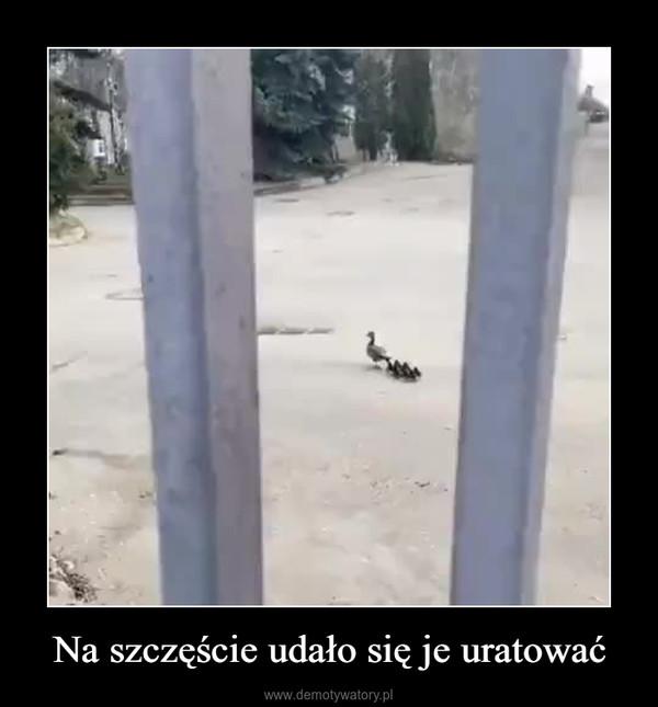 Na szczęście udało się je uratować –