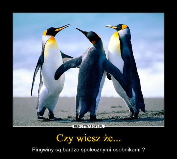 Czy wiesz że... – Pingwiny są bardzo społecznymi osobnikami ?