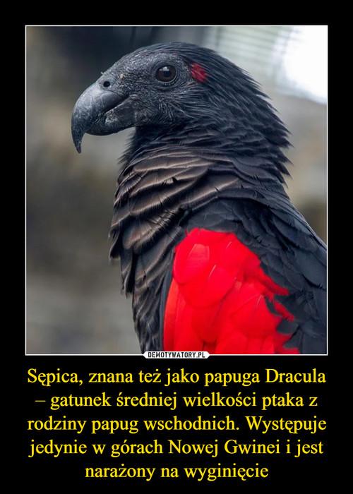 Sępica, znana też jako papuga Dracula – gatunek średniej wielkości ptaka z rodziny papug wschodnich. Występuje jedynie w górach Nowej Gwinei i jest narażony na wyginięcie