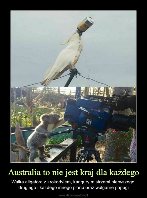 Australia to nie jest kraj dla każdego