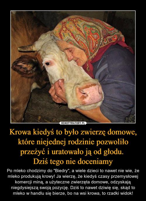 Krowa kiedyś to było zwierzę domowe, które niejednej rodzinie pozwoliło przeżyć i uratowało ją od głodu.  Dziś tego nie doceniamy