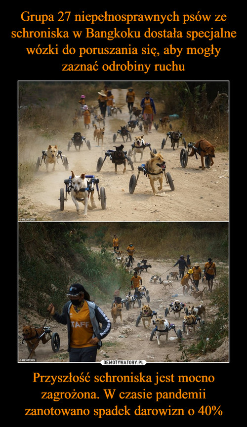 Grupa 27 niepełnosprawnych psów ze schroniska w Bangkoku dostała specjalne wózki do poruszania się, aby mogły zaznać odrobiny ruchu Przyszłość schroniska jest mocno zagrożona. W czasie pandemii zanotowano spadek darowizn o 40%