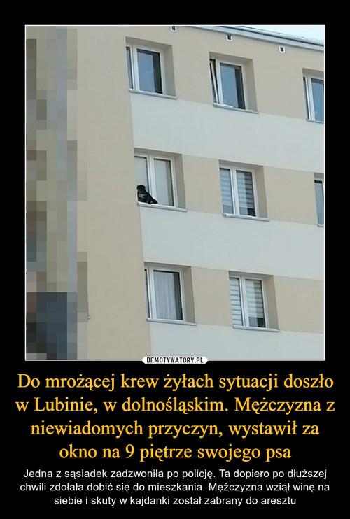 Do mrożącej krew żyłach sytuacji doszło w Lubinie, w dolnośląskim. Mężczyzna z niewiadomych przyczyn, wystawił za okno na 9 piętrze swojego psa
