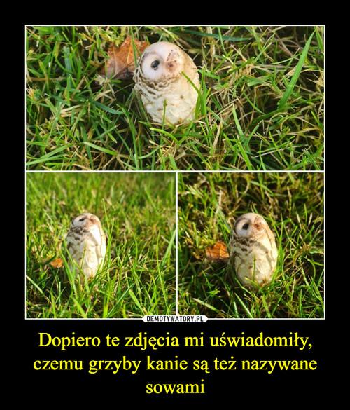 Dopiero te zdjęcia mi uświadomiły, czemu grzyby kanie są też nazywane sowami