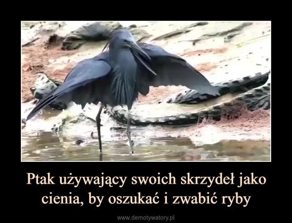 Ptak używający swoich skrzydeł jako cienia, by oszukać i zwabić ryby –