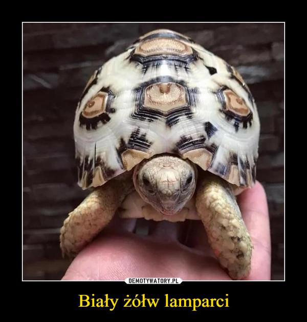 Biały żółw lamparci –
