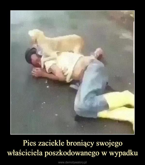 Pies zaciekle broniący swojego właściciela poszkodowanego w wypadku –