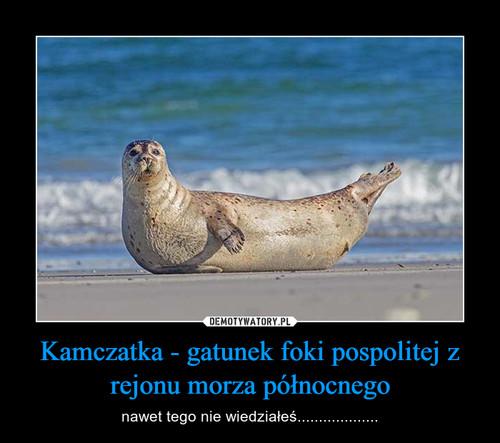 Kamczatka - gatunek foki pospolitej z rejonu morza północnego