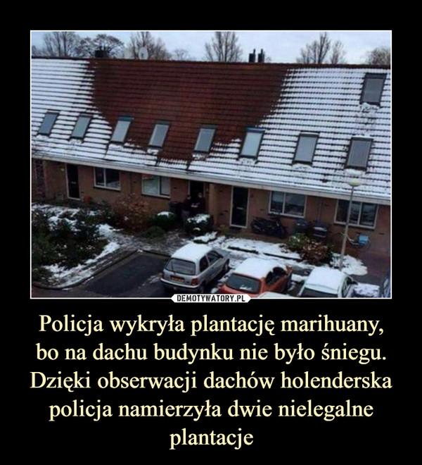 Policja wykryła plantację marihuany,bo na dachu budynku nie było śniegu. Dzięki obserwacji dachów holenderska policja namierzyła dwie nielegalne plantacje –
