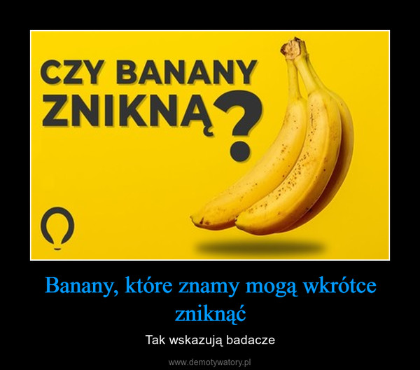 Banany, które znamy mogą wkrótce zniknąć – Tak wskazują badacze